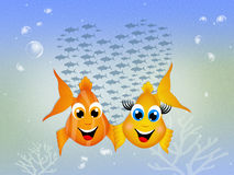 Couple of fishes Royalty Free Stock Photo