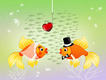Couple of fishes Stock Images