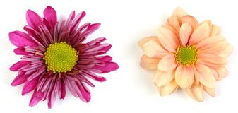 Couple of flowers Royalty Free Stock Photos