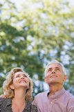 Couple in forest looking up Royalty Free Stock Photography