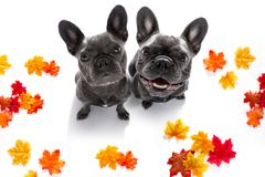 Couple of dogs with leash waiting for a walk stock images