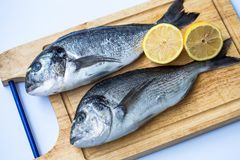 Couple of fresh raw sea bream fish Sparus aurata or Orata on wooden chopping board on a white background. royalty free stock photography