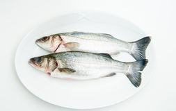Couple of fresh raw seabass fish on white plate Stock Images