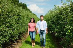 Couple in fruit orchard after summer Stock Photos