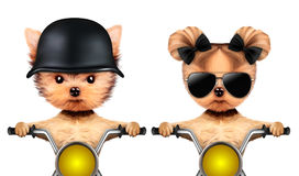 Couple of funny dogs on a motorbike Royalty Free Stock Photo