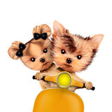 Couple of funny dogs on a motorbike Stock Photos