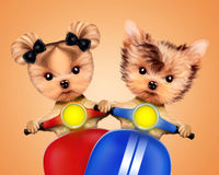 Couple of funny dogs on a motorbike Stock Images