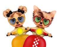 Couple of funny dogs on a motorbike Royalty Free Stock Photos