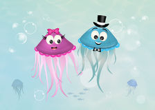 Couple of funny jellyfish Stock Images