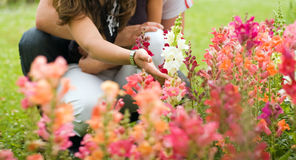 Couple in the garden Stock Photography