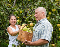 Couple in garden  picking apples Stock Photo