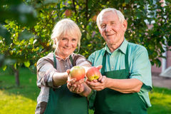 Couple of gardeners holding apples. Stock Image