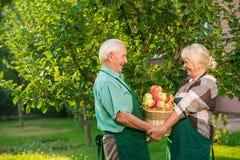 Couple of gardeners holding basket. Royalty Free Stock Photos