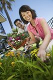 Couple Gardening Together Royalty Free Stock Photos