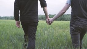 A couple of gay men walking on a green wheat field holding hands stock footage