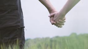 A couple of gay men walking on a green wheat field holding hands.  stock footage