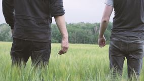 A couple of gay men walking on a green wheat field holding hands. N stock footage