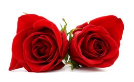 Couple gift roses Royalty Free Stock Photos