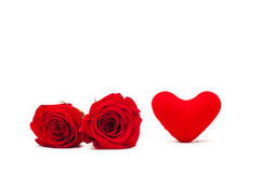 A couple gift roses on valentine day.  Stock Photo