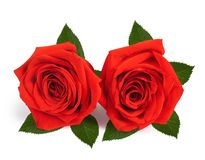 A couple gift roses on valentine day Royalty Free Stock Photography