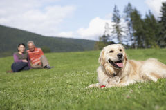 Couple With Golden Retriever On Grass Royalty Free Stock Photos