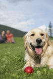 Couple With Golden Retriever On Grass Stock Image