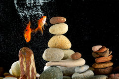 Couple goldfish in aquarium. Over well-arranged zen stone and nice bokeh of bubbles Royalty Free Stock Image