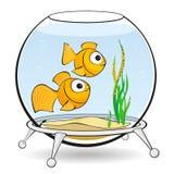 Couple goldfish in an aquarium with caviar Stock Image