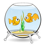 Couple goldfish in an aquarium Royalty Free Stock Photo