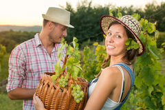 Couple in grape picking at the vineyard with a basket Royalty Free Stock Photo