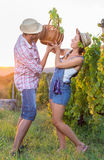 Couple in grape picking at the vineyard Stock Image