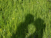 Couple in the grass. Shadow of kissing couple in the green grass Stock Images