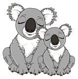 Couple of gray koalas Stock Photos