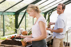 Couple in greenhouse putting soil in pots smiling Royalty Free Stock Photos