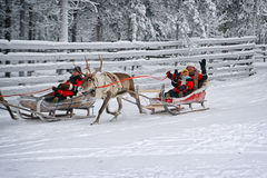 Couple greeting spectators during race on the reindeer sledges Royalty Free Stock Photos