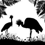Couple Grey crowned crane, Black crowned crane stands on land with grass and flowers black silhouette isolated on white background. Banner template, card Royalty Free Stock Image