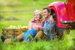 Couple harvesting apples Stock Photo