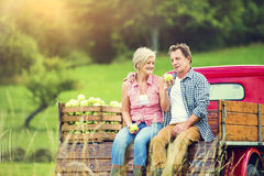 Couple harvesting apples Royalty Free Stock Images