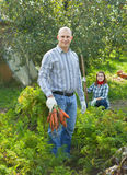 Couple  harvesting carrots Royalty Free Stock Photos