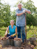 Couple   harvesting potatoes Stock Photo