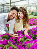 Couple have fun choosing flower pots in a greenhouse. Beautiful couple have fun choosing flower pots in a greenhouse royalty free stock photo