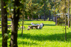 Couple have a rest in a park Royalty Free Stock Photos