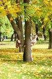 Couple having fun on a fall day Stock Photography