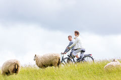 Couple having sea coast bicycle tour at levee. Couple having bicycle tour with bike at levee with sheep stock photo