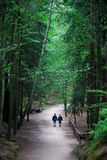 Couple having a walk. In forest Royalty Free Stock Images
