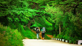 Couple of Hiker Tourists walking on road in beautiful Pine-tree forest Park Stock Photos