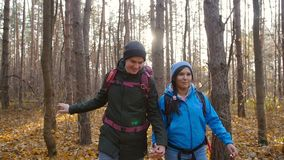 A couple hikers Hiking with backpacks in autumn forest . Concept of active rest. And travel stock video footage