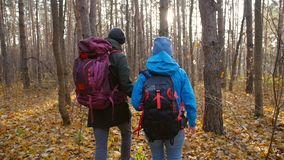 A couple hikers Hiking with backpacks in autumn forest . Concept of active rest. And travel stock video