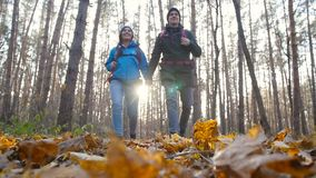 A couple hikers Hiking with backpacks in autumn forest . Concept of active rest stock video footage