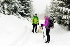 Couple hikers hiking in winter woods royalty free stock photography